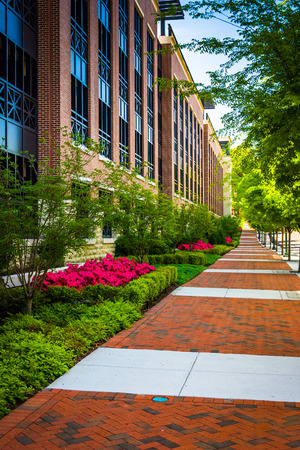 Colorful trees and bushes along a sidewalk in downtown Richmond, Virginia. Stock Photo