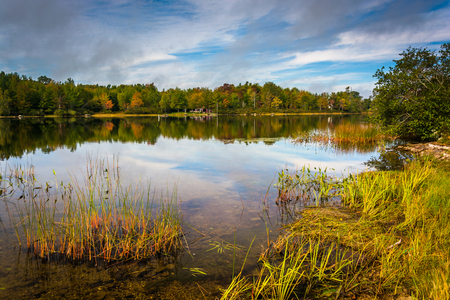 Early autumn reflections and grasses in Toddy Pond, near Orland, Maine. Stock Photo