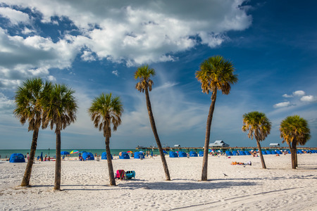 Palm trees on the beach in Clearwater Beach, Florida.