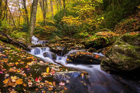 stoney: Autumn color and cascades on Stoney Fork, near the Blue Ridge Parkway, North Carolina. Stock Photo