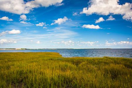 サウスカロライナ州チャールストン水辺公園の湿地牧草。
