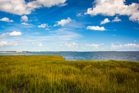 Marsh grasses at the Waterfront Park, in Charleston, South Carolina. Stock Photo