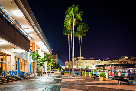 Palm trees and the exterior of the Convention Center at night in Tampa, Florida. Editorial