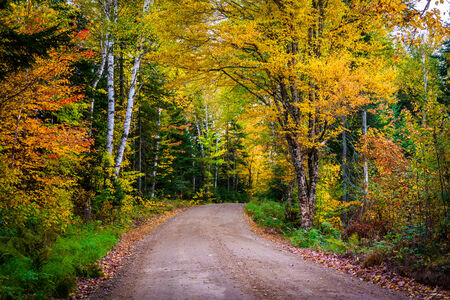 backroad: Autumn color along a dirt road in White Mountain National Forest, New Hampshire.