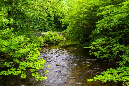 great smoky mountains: A small stream, at Great Smoky Mountains National Park, Tennessee.