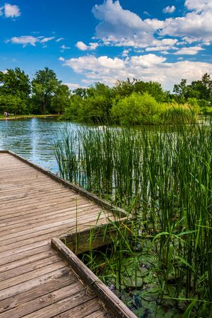 boardwalk trail: Boardwalk trail along the pond at Patterson Park, Baltimore, Maryland. Stock Photo