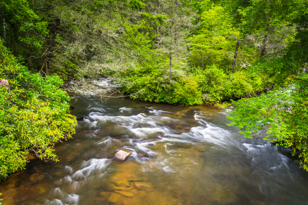 dupont: Little River, in Dupont State Forest, North Carolina.