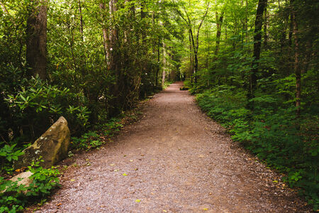 great smoky mountains: Trail in Great Smoky Mountains National Park, Tennessee.