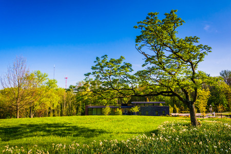 arboretum: Tree and the Visitor Center at Cylburn Arboretum, Baltimore, Maryland.