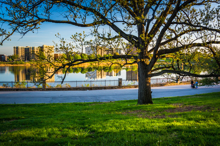 Tree and view of Druid Lake in Druid Hill Park, Baltimore, Maryland.