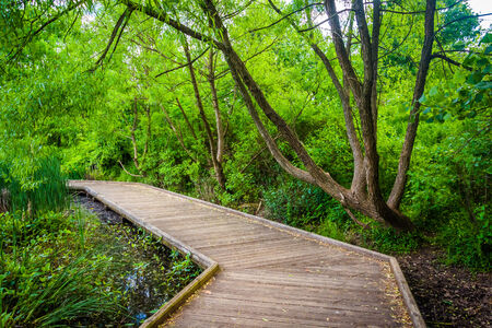 boardwalk trail: Boardwalk trail at Patterson Park, Baltimore, Maryland. Stock Photo