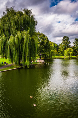 weeping willow: Weeping willow trees and a pond in the Boston Public Garden.