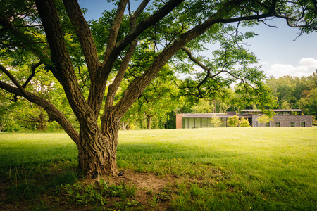 arboretum: Tree and the Visitor Center at Cylburn Arboretum in Baltimore,  Maryland.