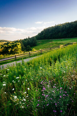 blue ridge: Wildflowers and grasses  at Moses Cone Park, along the Blue Ridge Parkway in North Carolina. Stock Photo