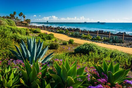 linda: Colorful flowers and view of the fishing pier at Linda Lane Park, in San Clemente, California. Stock Photo