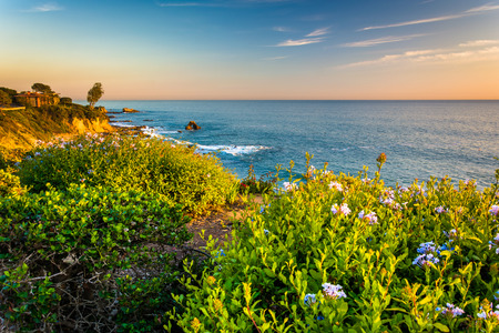 coasts: Flowers and view of the Pacific Ocean from cliffs in Corona del Mar, California.