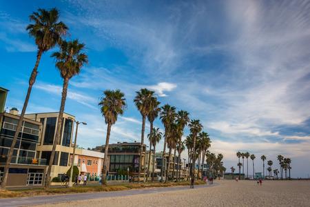 venice: Palm trees and houses along the beach, in Venice Beach, Los Angeles, California.