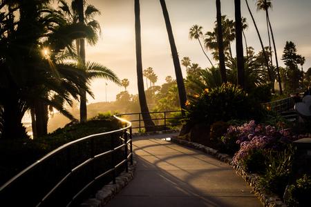 laguna: Palm trees and flowers along a walkway at sunset, at Heisler Park, Laguna Beach, California.
