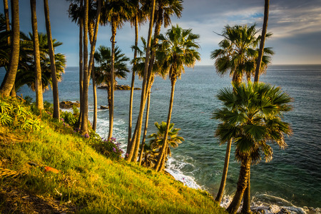 scenery: Palm trees and view of the Pacific Ocean, at Heisler Park, in Laguna Beach, California.