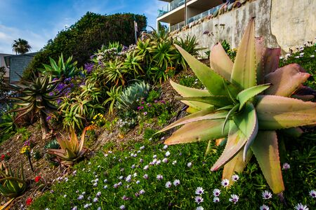 laguna: Beautiful garden in Laguna Beach, California. Stock Photo