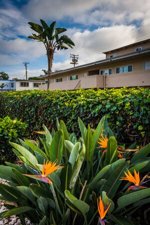 laguna: Flowers and hotel in Laguna Beach, California.