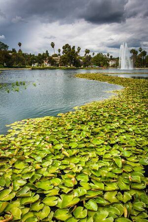 echo: Lily pads in Echo Park Lake, in Los Angeles, California.