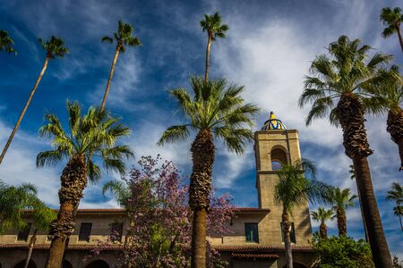 riverside trees: Palm trees and the Riverside Municipal Auditorium, in downtown Riverside, California. Editorial
