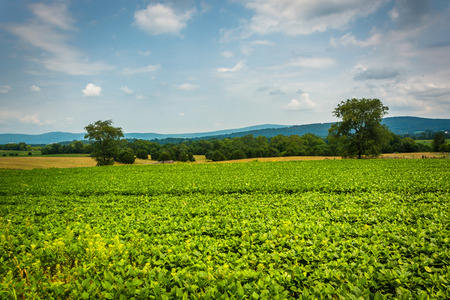 battlefield: Farm field at Antietam National Battlefield, Maryland. Stock Photo