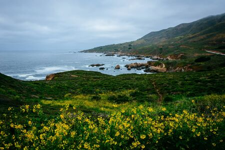 ocean state: Yellow flowers and view of the Pacific Ocean at Garrapata State Park, California.