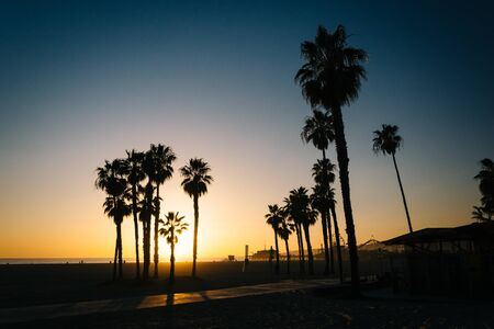santa monica: Palm trees on the beach at sunset in Santa Monica, California. Stock Photo