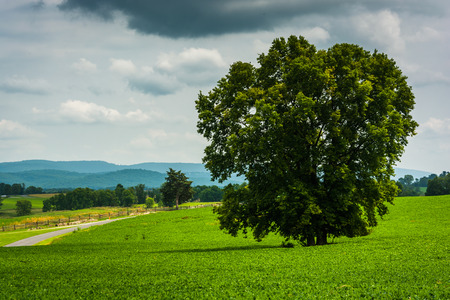 battlefield: Tree and road in a field, at Antietam National Battlefield, Maryland.