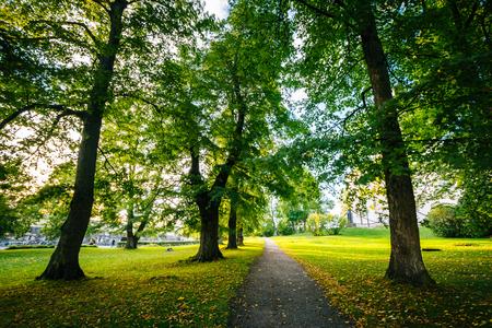 Trees along a path at Suomenlinna, in Helsinki, Finland.