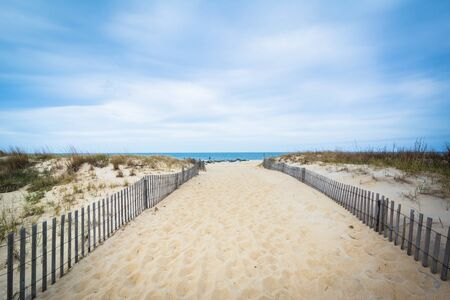 Path to the beach at Cape Henlopen State Park, in Rehoboth Beach, Delaware. 免版税图像