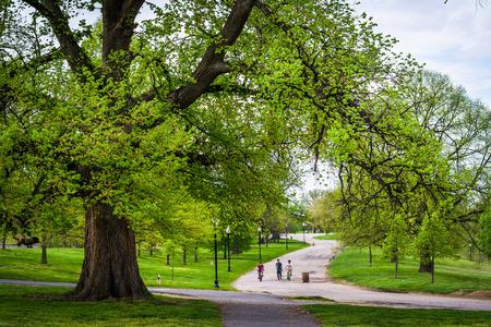walking paths: Trees and walking paths at Patterson Park, Baltimore, Maryland.