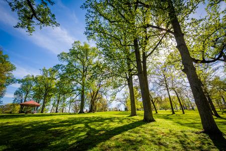 The sun shining through trees at Druid Hill Park, in Baltimore, Maryland. 版權商用圖片