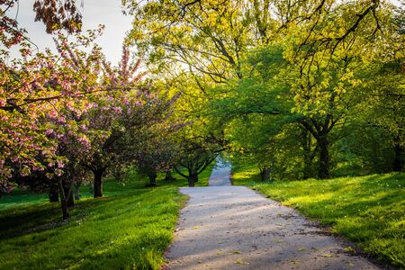 druid: Spring colors along a path at Druid Hill Park in Baltimore, Maryland.