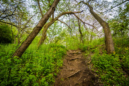 high park: Trail and trees in a forested area of High Park, Toronto, Ontario.
