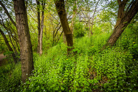 high park: Trees in a forested area of High Park, Toronto, Ontario. Stock Photo