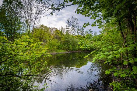 high park: The Wendigo Pond at High Park, in Toronto, Ontario. Stock Photo