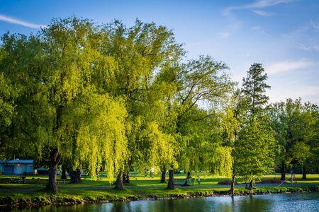 ontario: Trees along Lake Ontario at Centre Island, in Toronto, Ontario.