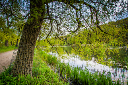 high park: Tree and the Grenadier Pond, at High Park, in Toronto, Ontario. Stock Photo