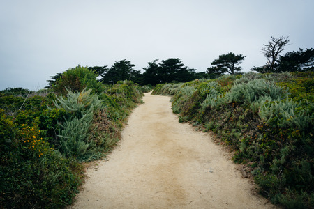 state of mood: Trail at Point Lobos State Natural Reserve, in Carmel, California.