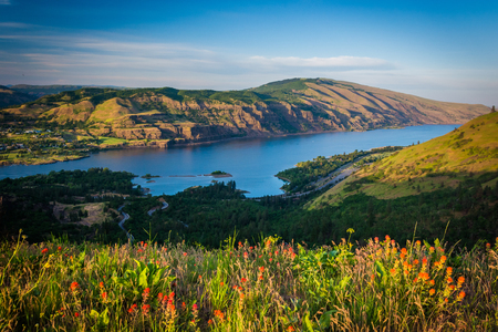 Wildflowers and view at Tom McCall Nature Preserve, Columbia River Gorge, Oregon. 版權商用圖片