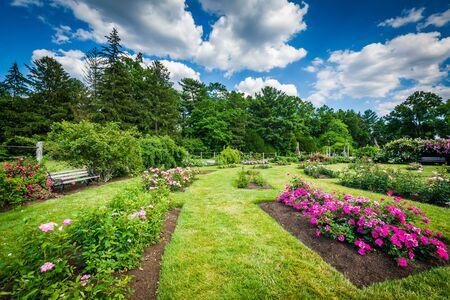 hartford: Rose gardens at Elizabeth Park, in Hartford, Connecticut.