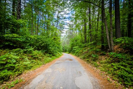 state park: Narrow road in the forest at Bear Brook State Park, New Hampshire.