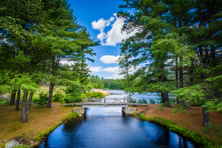 state park: Bridge and pine trees at Bear Brook State Park, New Hampshire.