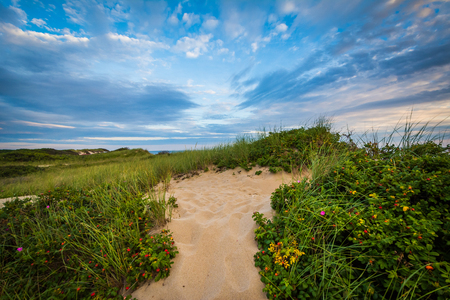 Sand dunes in the Province Lands at Cape Cod National Seashore, Massachusetts. Stock Photo