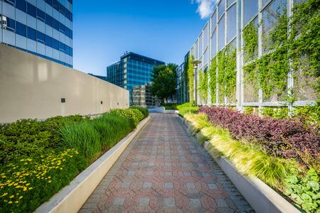 Gardens Along A Walkway And Modern Buildings In Rosslyn, Arlington ...