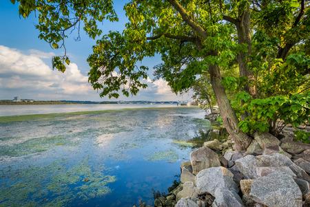 alexandria: Trees and rocks along the Potomac River, in Alexandria, Virginia.