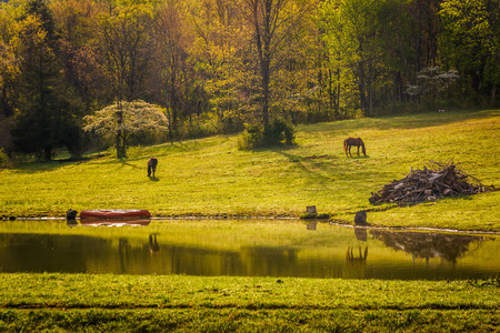 Horses and pond in the rural Shenandoah Valley of Virginia.
